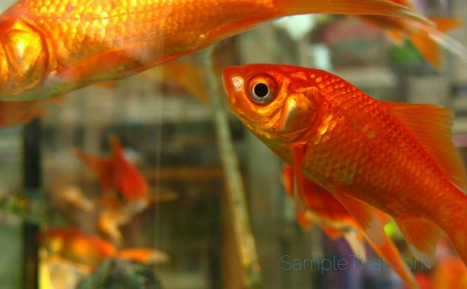 Free Fish Food Sample