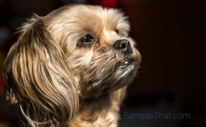 Free Pet Probiotic Sample