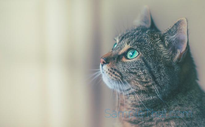 Rebate on Arm & Hammer Cat Litter